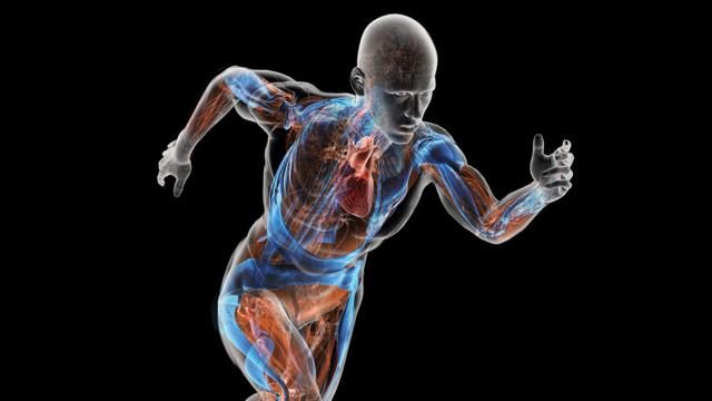 کدام یک از اعضای بدن غیرحیاتی هستند؟