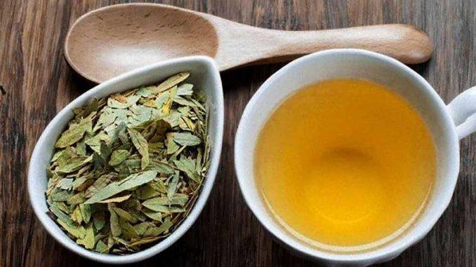 چای سنا و فواید آن در طب سنتی