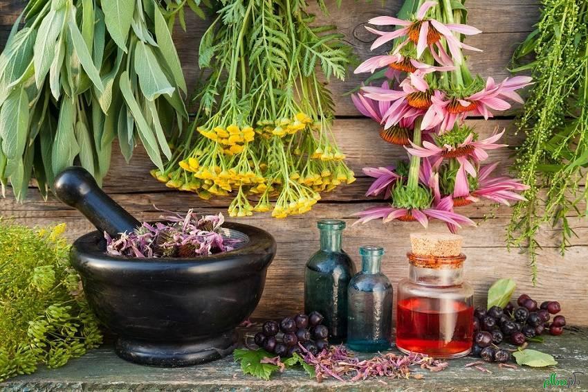 با ۱۱ مُسکن گیاهی و طبیعی قوی در طب سنتی آشنا شوید