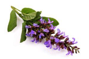 مریم گلی برای بوی عرق