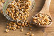 خواص جوانه گندم در طب سنتی