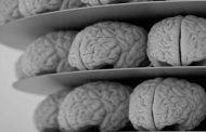 پیشگیری از پیری مغز در طب سنتی
