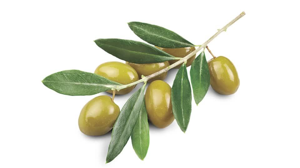 خواص برگ زیتون در طب سنتی و نحوه مصرف آن