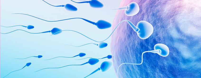 تقویت اسپرم در طب سنتی