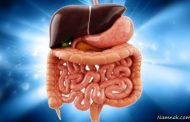 تشخیص و درمان بیماری کبد چرب با کمک باکتری های روده
